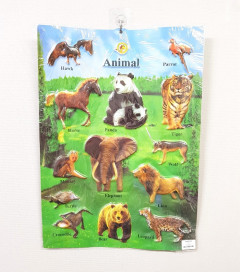 Animal Poster - Educational Learning Poster